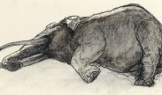 reclining elephant