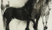 Fries paard / Frisian horse